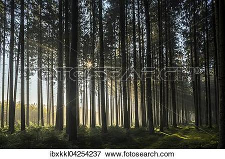 Picture of Herbststimmung im Wald, Stadtwald, Mindelheim, Allgau.