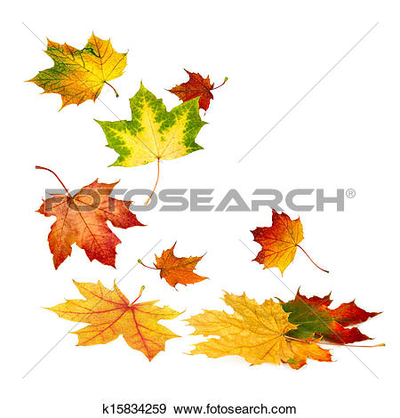 Picture of Round border composed of autumn leaves k7013727.