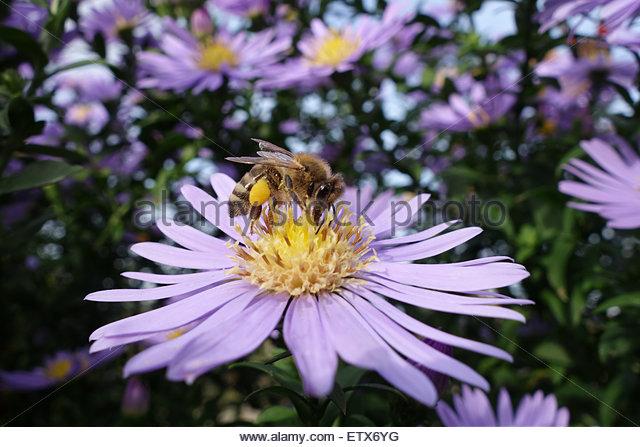 Bee Pollen Basket Stock Photos & Bee Pollen Basket Stock Images.
