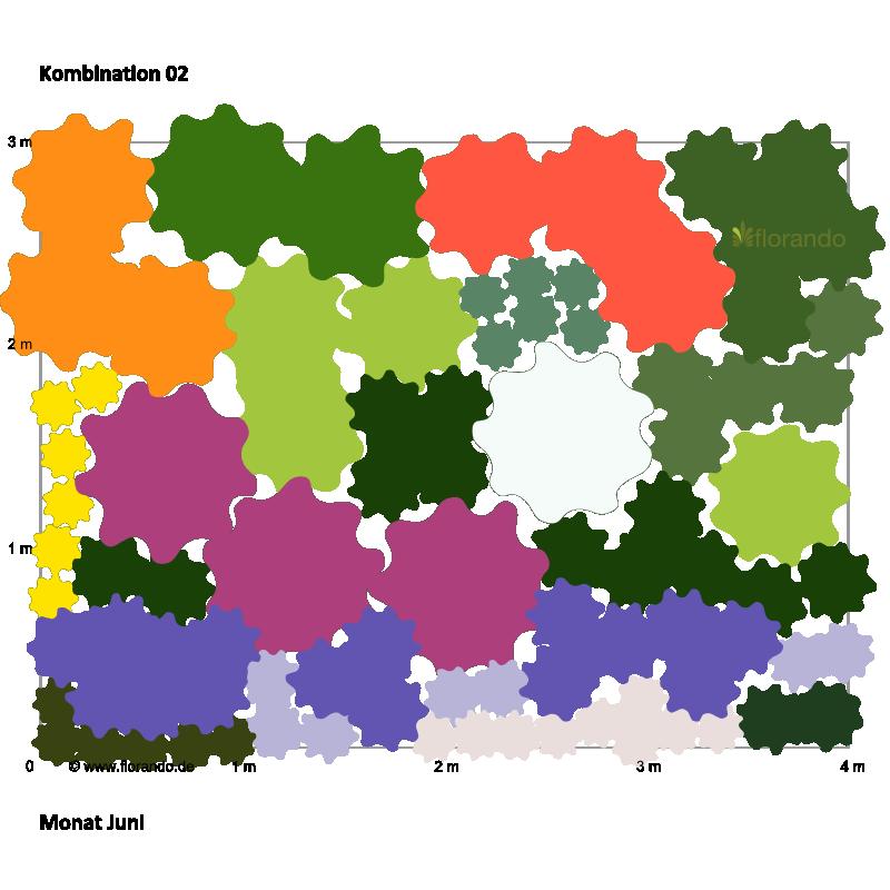 Pflanzplan mit Pfingstrosen, Phlox, Herbstastern, Liatris und.