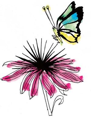 Echinacea: Seeigel mit amerikanischen Wurzeln.