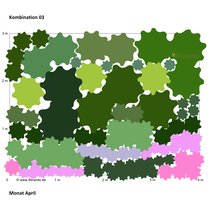 Pflanzplan mit Pfingstrosen, Phlox, Staudensonnenblumen.