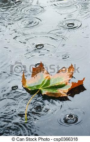 Bilder von Herbst, Regen.