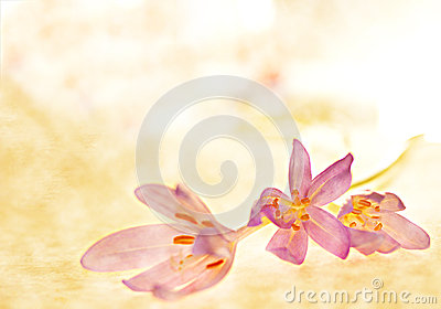 Crocus Clipart Stock Illustrationen, Vektors, & Klipart.