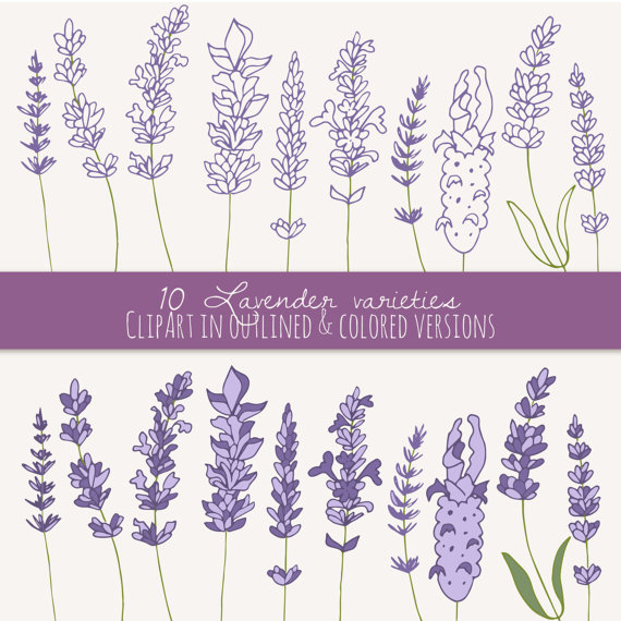 CLIP ART: Lavender Sprigs // Photoshop Brushes // Digital Elements.
