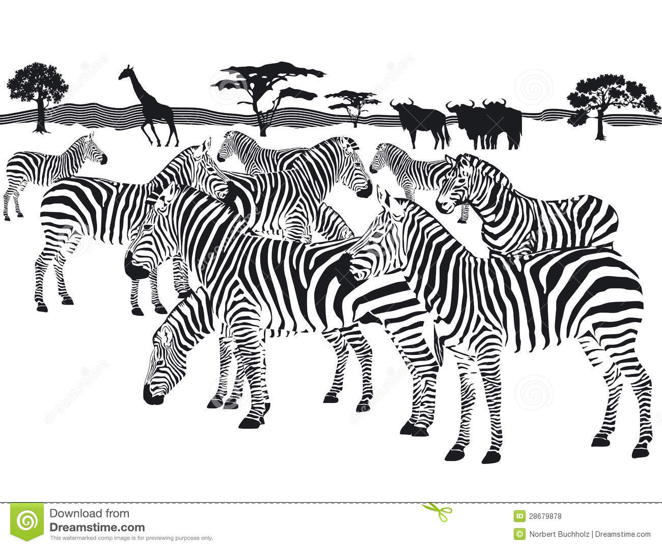 Herd Of Zebras Royalty Free Stock Photos.