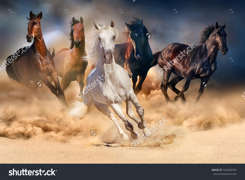 Horse Herd Run Desert Sand Storm Stock Photo 323504294.