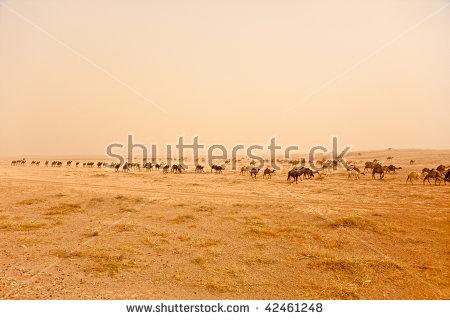 Desert Sand Storm Stock Photos, Royalty.