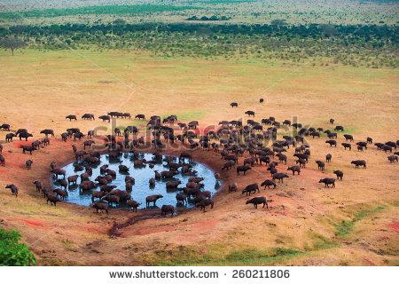 Herd Stock Photos, Royalty.