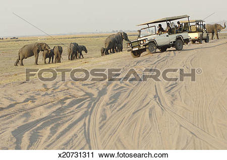 Stock Photography of People watching herd of elephants from off.