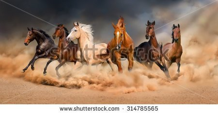 Horse Herd Run Desert Sand Storm Stock Photo 323504294.