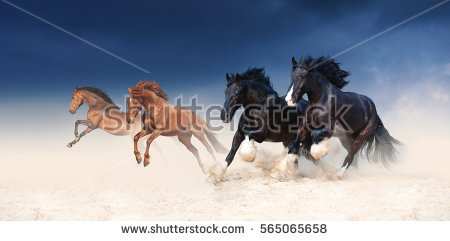 Ride Herd On Stock Photos, Royalty.
