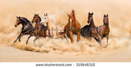 Horse Herd Run In Desert Sand Storm Stock Photo 315646310.