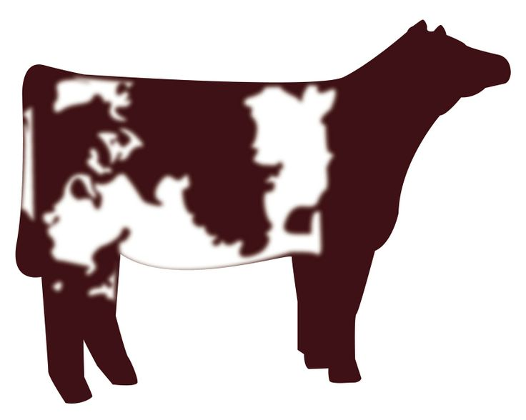 Similiar Hereford Cow Clip Art Keywords.