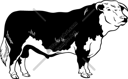 Hereford cattle clipart.