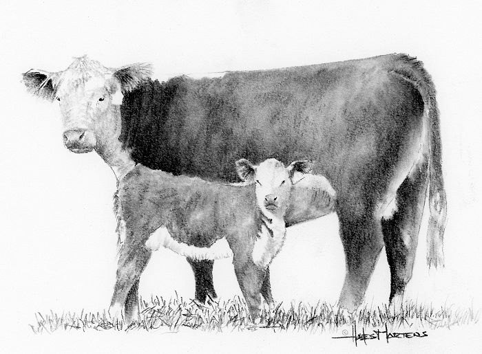 Hereford Cow Clip Art Related Keywords & Suggestions.