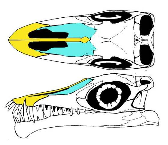 Images Of The Skull Clipart.