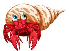 Hermit Crab Facts Habitat Coloring Page Clipart.