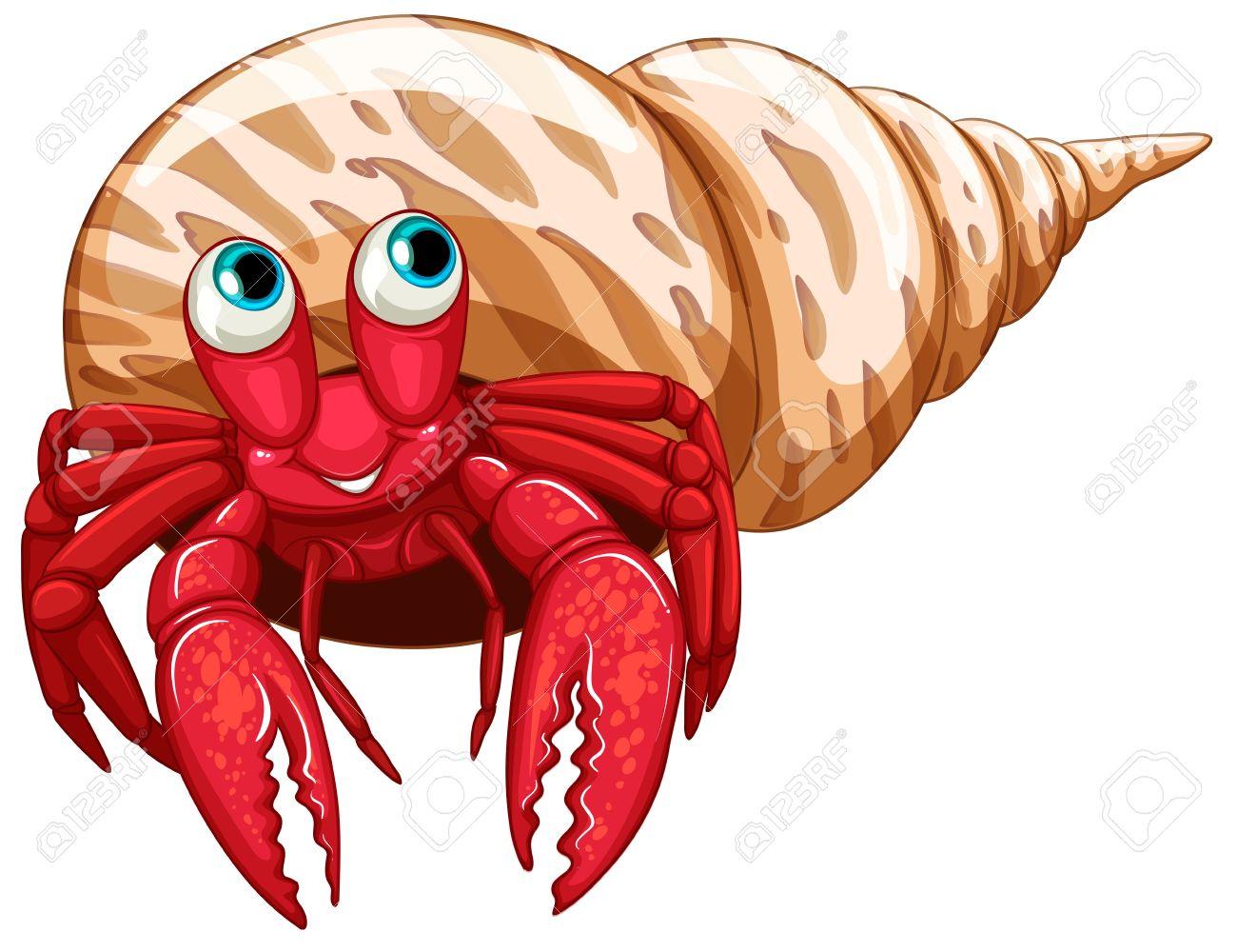 Illustration of a single hermit crab.