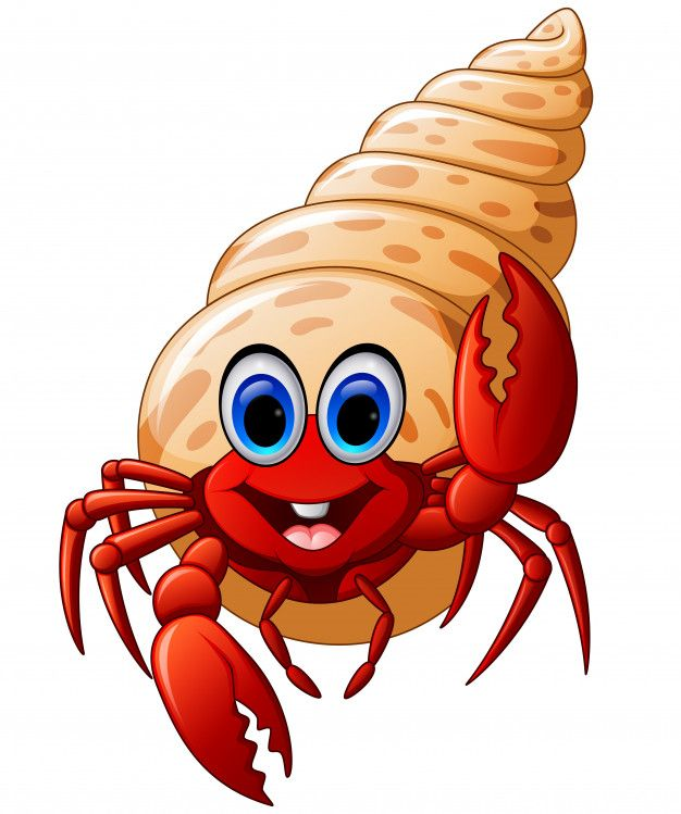 Cartoon hermit crab Premium Vector.
