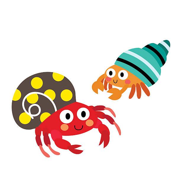 Best Hermit Crab Illustrations, Royalty.