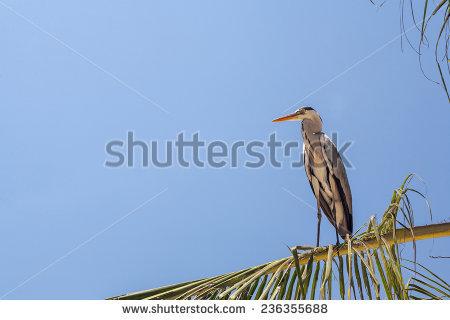 Grey Heron Shadow Stock Photos, Royalty.