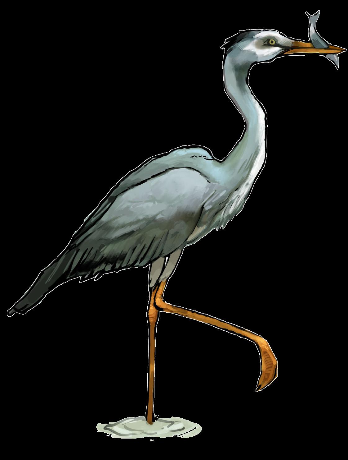 Clipart heron.