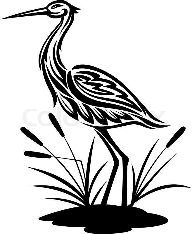Stork, heron, crane and egret birds vector illustrations in.