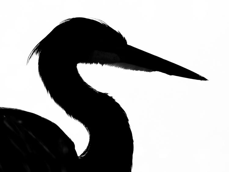 Heron Silhouette Clipart.