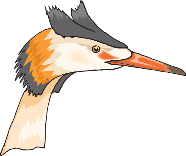 Heron Head Clip Art at Clker.com.