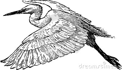 White Heron Flying Stock Illustrations.