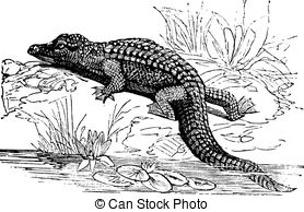 Herpetology Illustrations and Clip Art. 238 Herpetology royalty.