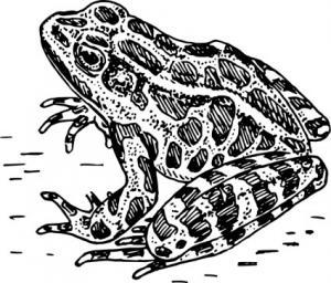 Herpetology Clip Art Download.
