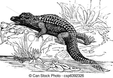 Clip Art Vector of Nile Crocodile or Crocodylus niloticus vintage.
