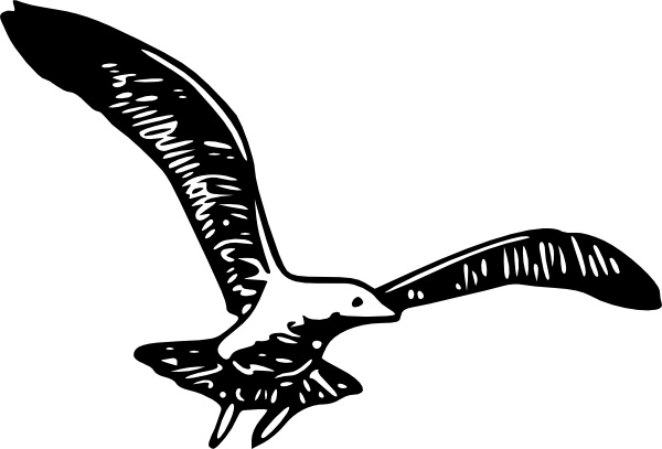 Herring Gull B clip art Free vector in Open office drawing svg.