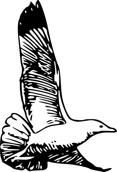 Herring Gull clip art Free Vector / 4Vector.