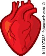 Human heart Clipart Illustrations. 22,000 human heart clip art.