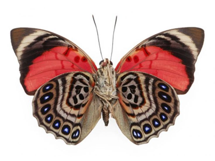 1000+ images about Butterfly wings on Pinterest.