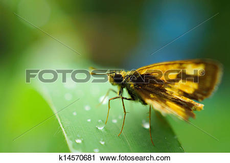 Stock Photography of Fresh morning dew and butterfly (Family.