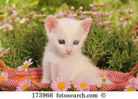 Heterochromia iridis Images and Stock Photos. 16 heterochromia.