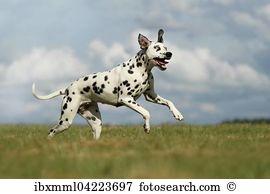 Heterochromia Stock Photo Images. 148 heterochromia royalty free.