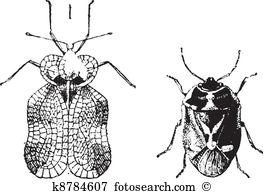 Heteroptera Clipart Vector Graphics. 19 heteroptera EPS clip art.