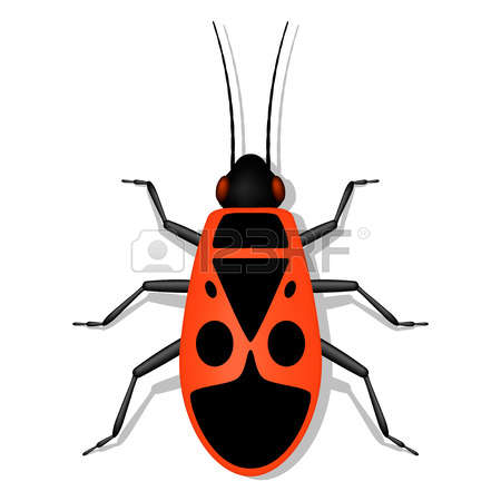 Heteroptera Bug Stock Photos Images. Royalty Free Heteroptera Bug.