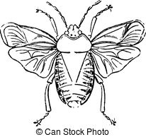 Heteroptera Stock Illustrations. 23 Heteroptera clip art images.