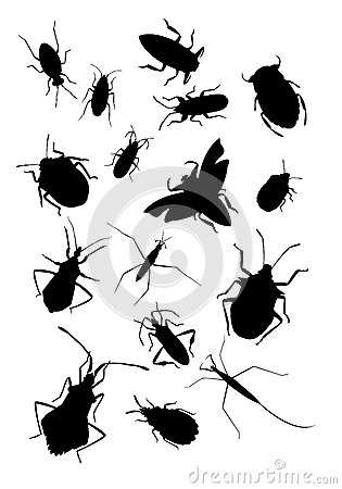 Collection Of True Bugs Stock Photos.