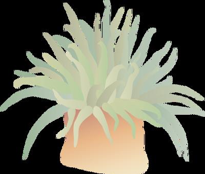 Sea anemone 1.