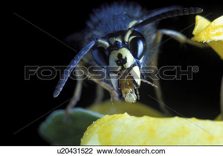 Stock Photo of insect, CLOSE, hexapoda, flower, close.