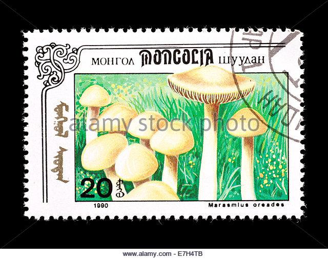 Fairy Ring Mushrooms Stock Photos & Fairy Ring Mushrooms Stock.