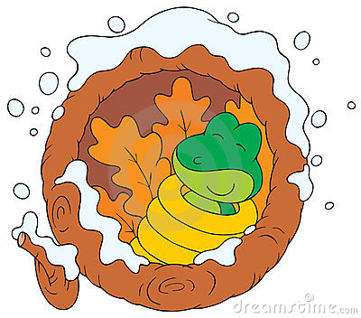 Hibernating Frog Clipart.