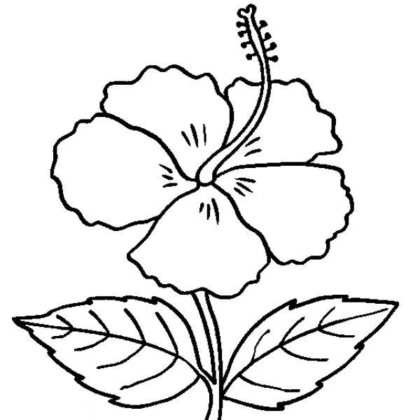 1826 Hibiscus free clipart.